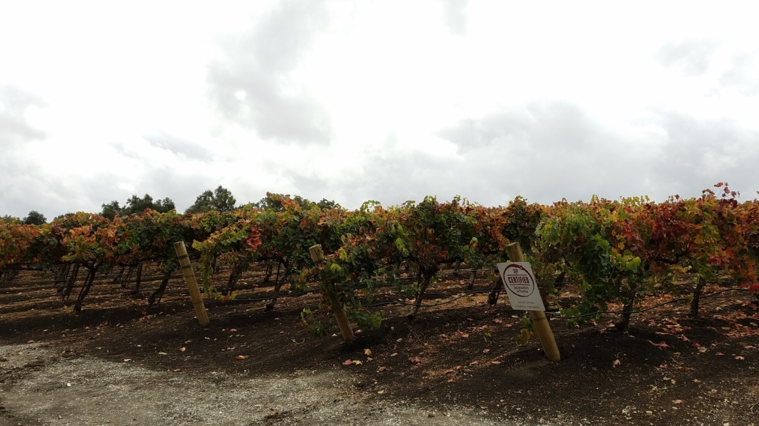 Opolo Winery Vines
